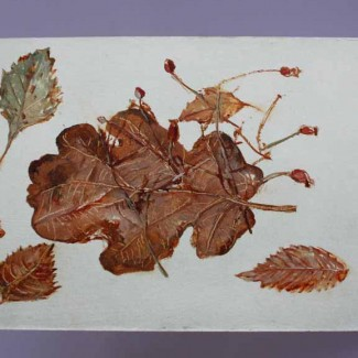 carolyn-sergeant-oak-leaf-1