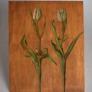 carolyn-sergeant-tulips-1
