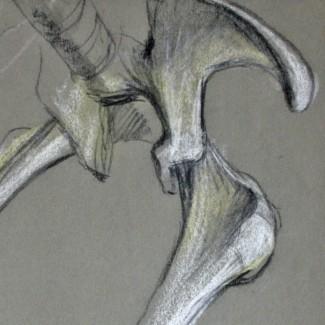 David-Weeks-Diprotodon-2